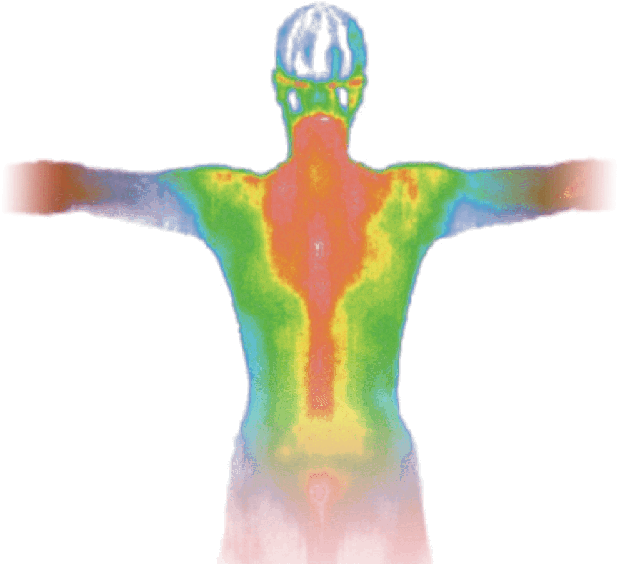 Heat map of a male torso.