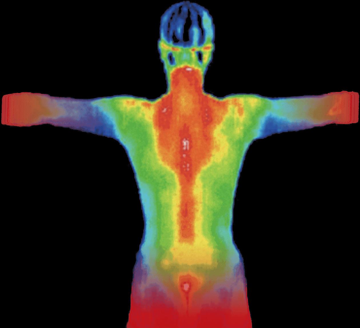 Heat map of a male torso.